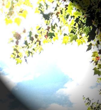 Herbstspezial